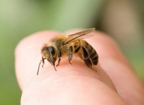 Puntura d'ape