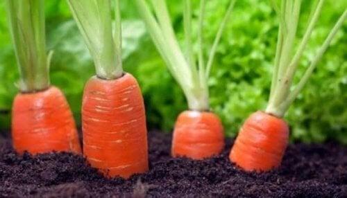 Carote antiossidanti e benefici