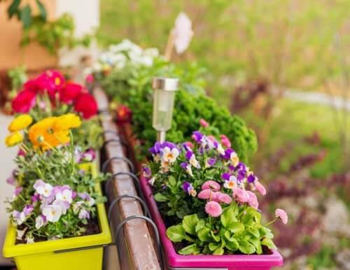 Gerani per fare un mini giardino
