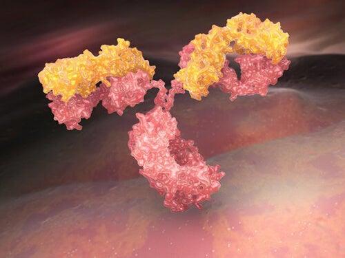 Cosa sono le immunoglobuline?