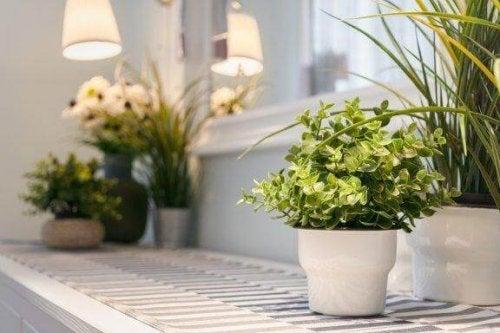 Piante da appartamento e come prendersene cura