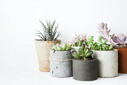 Molti vasi piccoli