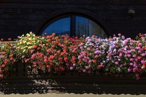 Piante profumate per il giardino, quali scegliere?