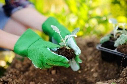Rinvasare le piante in modo corretto