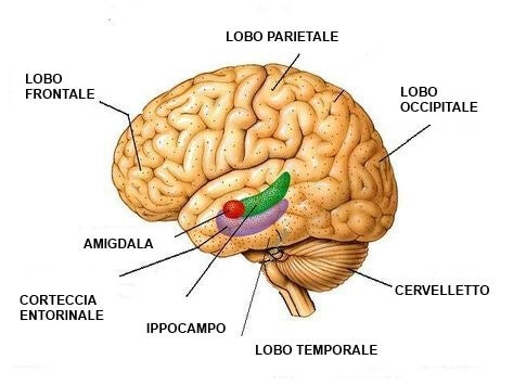 Effetti della depressione sul cervello