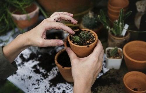 Mani con vasetto di terra e cactus
