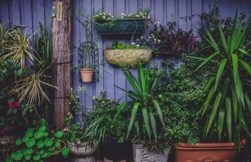 Orto in casa: 4 progetti (anche per chi ha poco spazio)