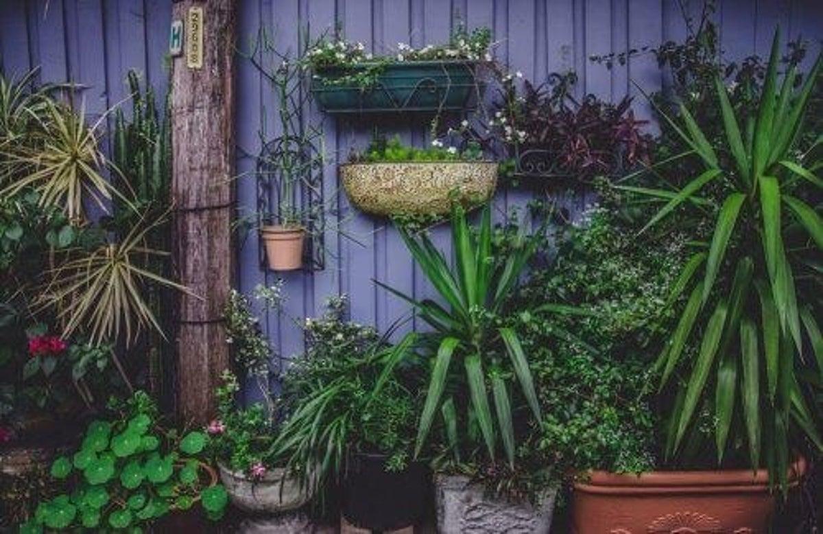 Coltivare Piselli In Vaso orto in casa: 4 progetti (anche per chi ha poco spazio