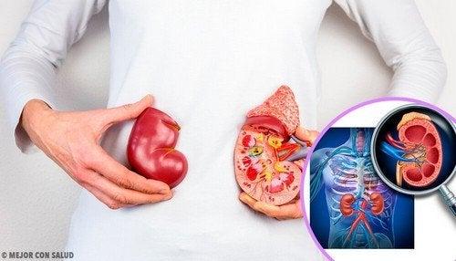 Trapianto di rene, dati da conoscere
