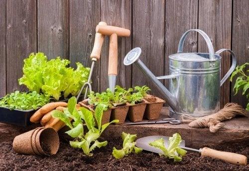 Piantine e attrezzi per il giardinaggio
