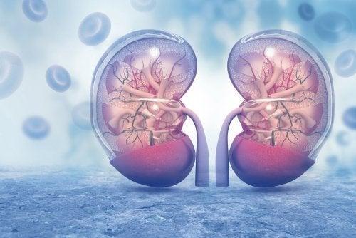 Amlodipina e insufficienza renale