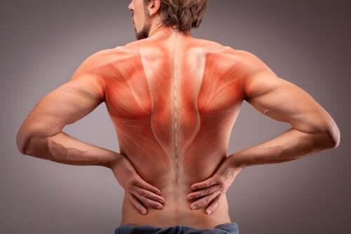 I muscoli della schiena: tipi e funzioni