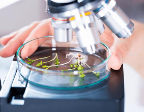Fitoterapia e ricerca