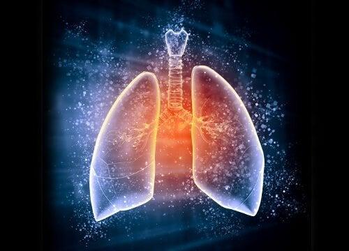 Disegno dei polmoni