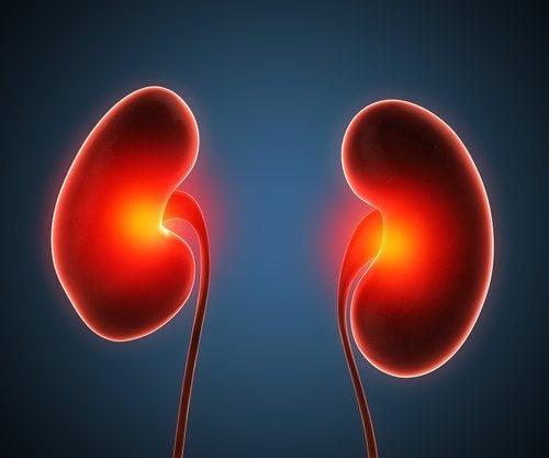 Ascesso renale: sintomi e trattamenti