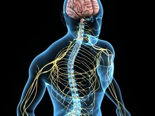 Tremore essenziale e origine neurologica