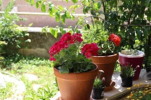 Fiori estivi: 6 opzioni per il giardino