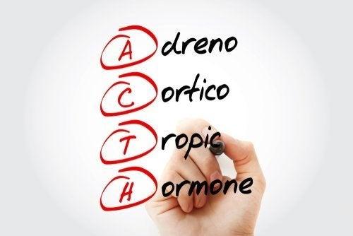 Corticotropina: che cos'è e come agisce?