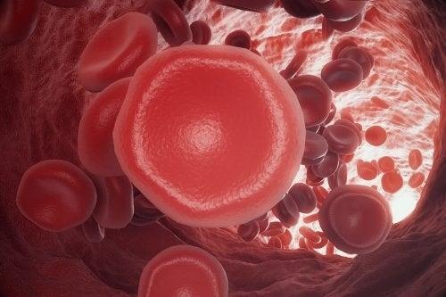 Coagulazione del sangue: cos'è e come avviene?