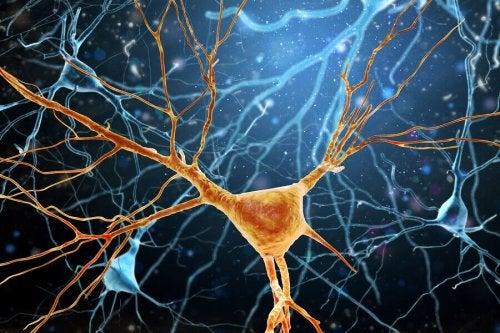 La neurogenesi è complesso processo