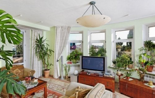 Decorare casa con le piante