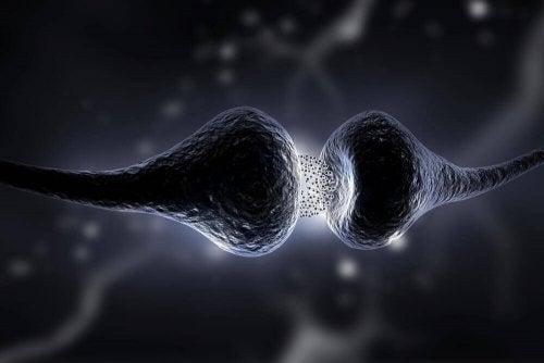 Sinapsi e rilascio di serotonina