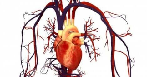 Atorvastatina per prevenire malattie cardiovascolari