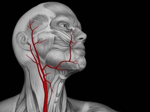 Malattia di Moyamoya: sintomi e terapia