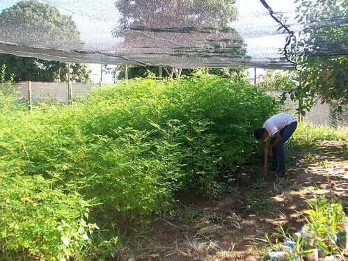 Coltivazioni e orti