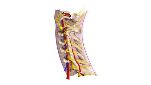 Nervi spinali cervicali, tutto quello che c'è da sapere