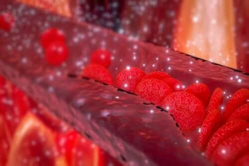 Arteria e circolazione sanguigna