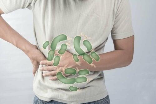 Batteri nello stomaco