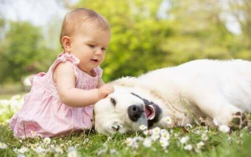 Bambina che gioca con un cane