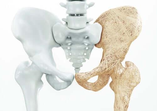 Pavimento pelvico maschile, ossa del bacino