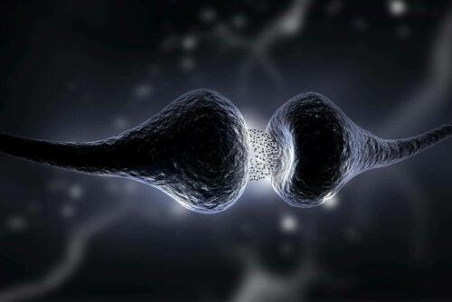 Sinapsi dei neuroni