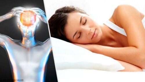 Il sonno è fondamentale per il cervello
