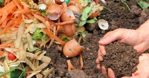 Compost con cui concimare il terreno