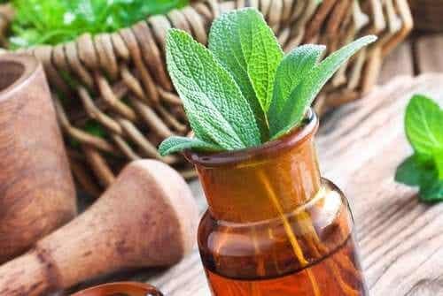 Le migliori piante medicinali e utilizzi