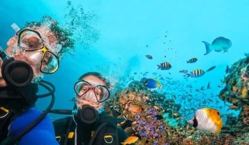 Sub e pesci tropicali.