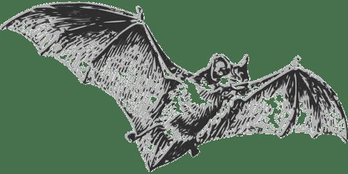 La causa del Coronavirus è il pipistrello?