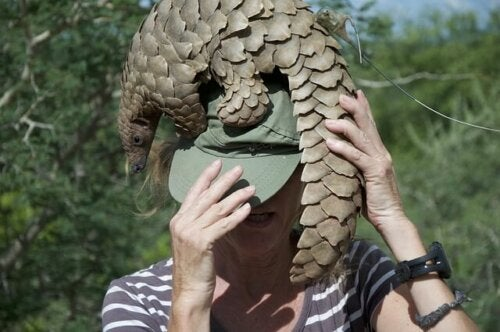 Uomo con pangolino sulla testa