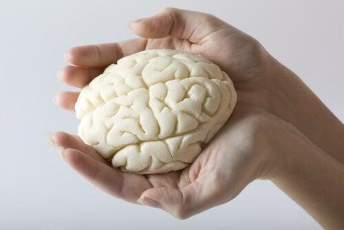 Mani con modellino del cervello