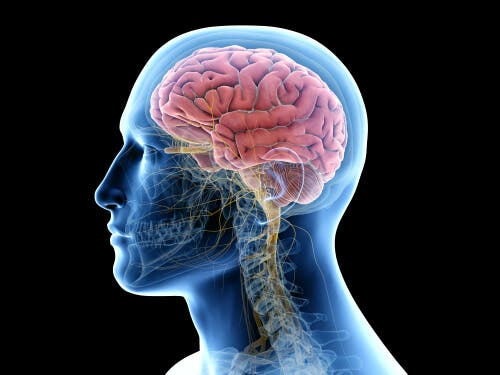 Tessuto cerebrale ed encefalite