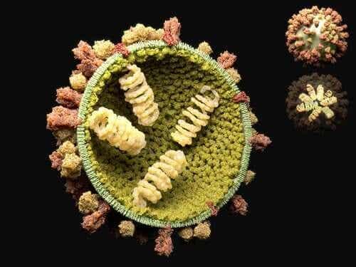Il ciclo riproduttivo dei virus e conseguenze per la salute