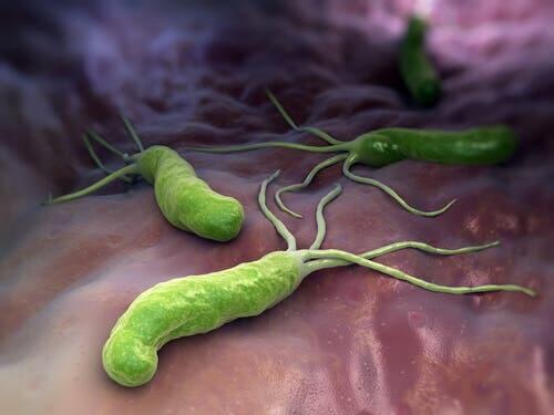 Batteri nell'organismo