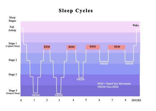 Schema dei ritmi circadiani