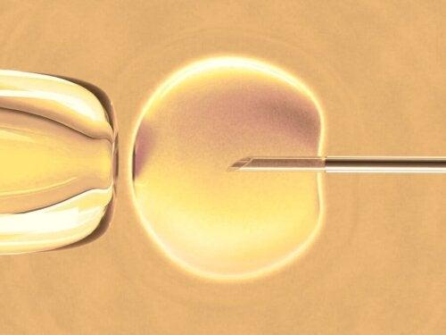 Fecondazione in vitro: in cosa consiste?
