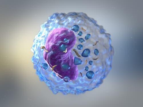 Globuli bianchi risposta immunitaria