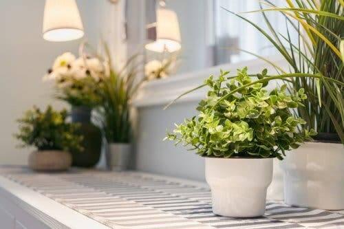 Illuminazione adatta per le piantine aromatiche fresche