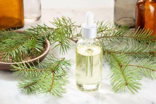 Olio essenziale di pino per combattere il raffreddore
